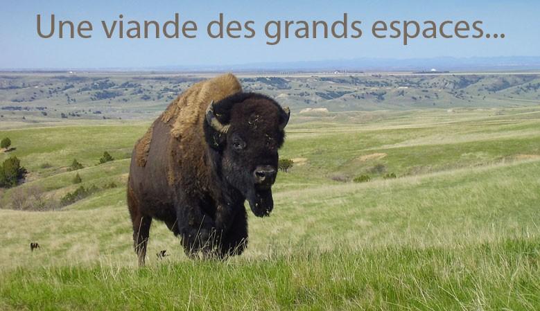 Le Bison un animal des grands espaces